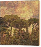The Pines Of Rome Wood Print