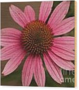 The Pink Daisy Wood Print