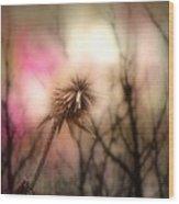 The Pink Light Wood Print