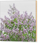 The Pink Of Spring - Featured 2 Wood Print