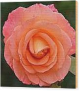 The Pink Rose Wood Print