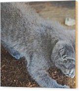 The Playful Kitten Wood Print