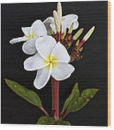 The Plumeria Wood Print