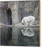 The Polar Bear And The Purple Chair Wood Print