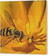 The Pollen Hunter Wood Print