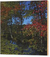 The Pond In Autumn Wood Print