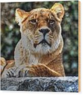 The Pondering Lioness Wood Print