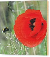 The Poppy And The Bee Wood Print