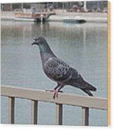 The Posing Pigeon Wood Print