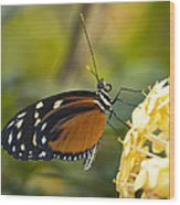 The Postman Butterfly  Wood Print