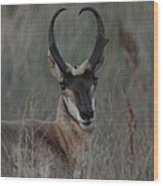 The Pronghorn 2 Dry Brushed Wood Print