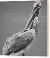 The Proper Pelican Wood Print