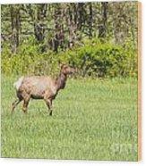 The Proud Elk Wood Print