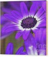 The Purple Daisy Wood Print