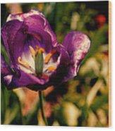 The Purple Rose Of Cairo Wood Print