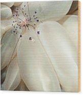 The Rare Colemans Coral Shrimp Wood Print