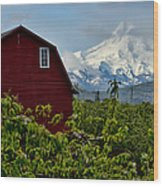 The Red Barn And Mt. Hood Wood Print