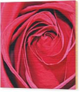 The Red Rose Blooming Wood Print