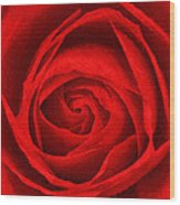 The Red Rose Wood Print