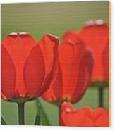 The Red Tulips Wood Print