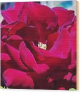 The Red Velvet Rose Wood Print by Jan Moore