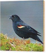 The Red-winged Blackbird (agelaius Wood Print