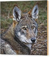 The Red Wolf Wood Print