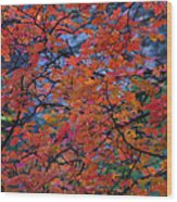 The Reds Of Autumn  Wood Print