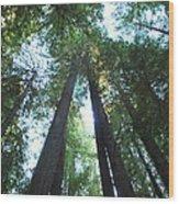 The Redwood Giants Wood Print