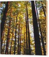 The Redwoods Of Florence Keller Park Wood Print