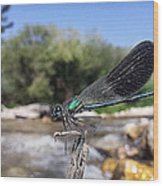 The River Dragonfly Wood Print