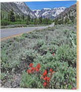 The Road Into Lundy Canyon Wood Print