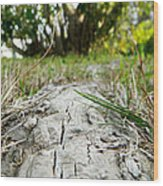 The Root Of Happiness Wood Print