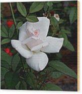 The Pink Rose Wood Print