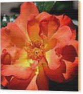 The Rose Of Joy Wood Print