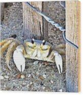 The Sandcrab - Seeking Shelter Wood Print