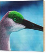 The Sandhilll Crane  Wood Print