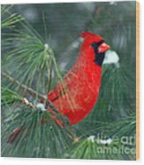 The Santa Bird Wood Print