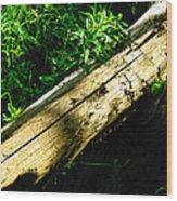The Sapling Wood Print