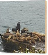 The Sea Lion And His Harem Wood Print by Mary Machare