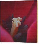 The Secret Life Of Tulips Wood Print