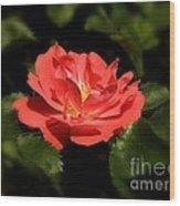 The Secret Rose Wood Print