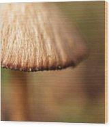 The Secret World Of Shroooms Wood Print