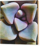 The Sedum Succulent Wood Print