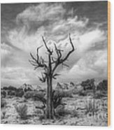 The Sentinal South Coyote Buttes Wood Print