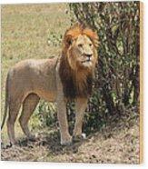 King Of The Savannah Wood Print