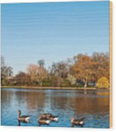The Serpentine Ducks Wood Print by Luis Alvarenga