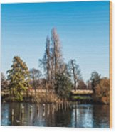 The Serpentine Seagulls Wood Print by Luis Alvarenga