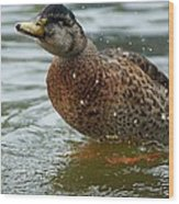 The Shaking Duck Wood Print by Thomas Fouch