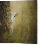 The Shy Lamb Wood Print